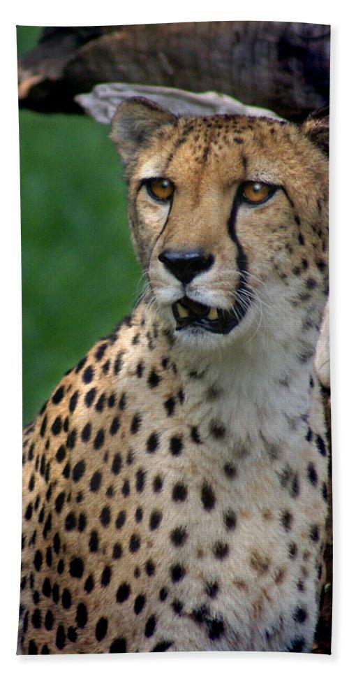 Cheeta Bath Sheet featuring the photograph Cheetah by Heather Coen