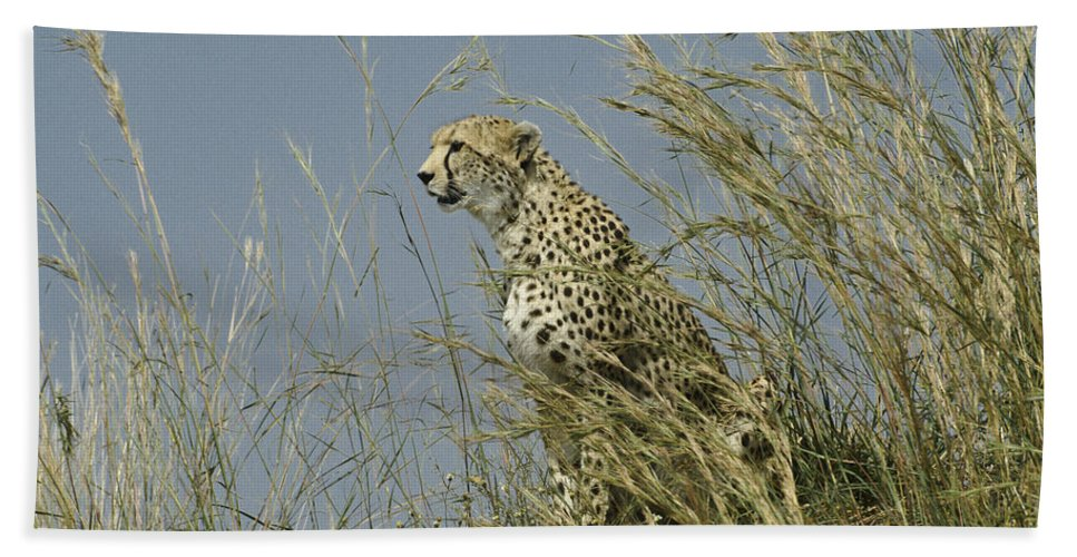 Africa Hand Towel featuring the photograph Cheetah Lookout by Michele Burgess