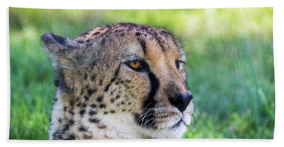 Cheetah Bath Sheet featuring the photograph Cheetah by Ronald Hoehn