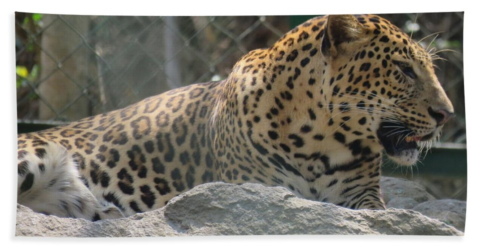Leopard Hand Towel featuring the photograph Cheetah by Utpal Datta
