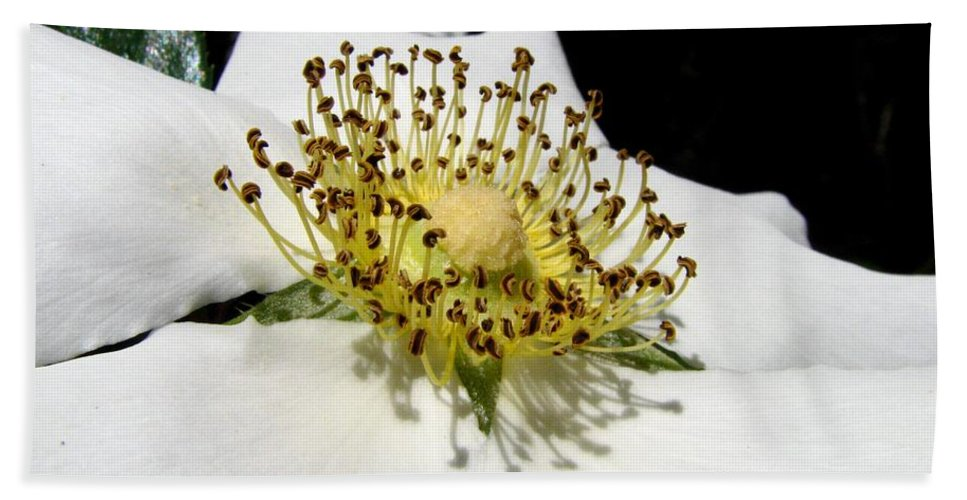 Cherokee Rose Hand Towel featuring the photograph Cherokee Rose Macro by J M Farris Photography