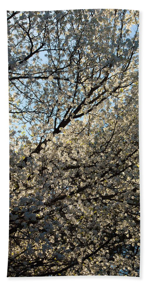 America Hand Towel featuring the photograph Cherry Blossom by Riccardo Forte