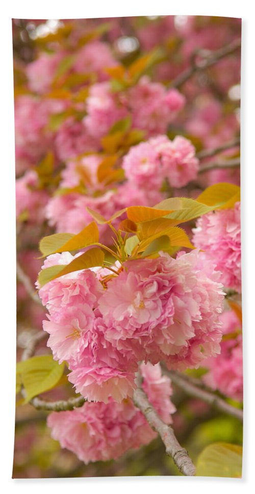 Cherry Bath Sheet featuring the photograph Cherry Blossom by Sebastian Musial