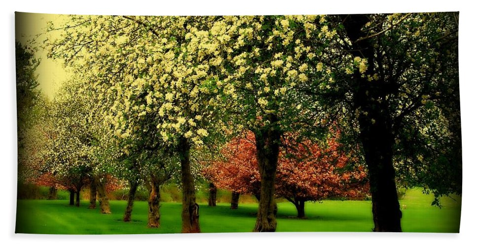 Cherry Blossom Trees Hand Towel featuring the photograph Cherry Blossom Trees by Angie Tirado