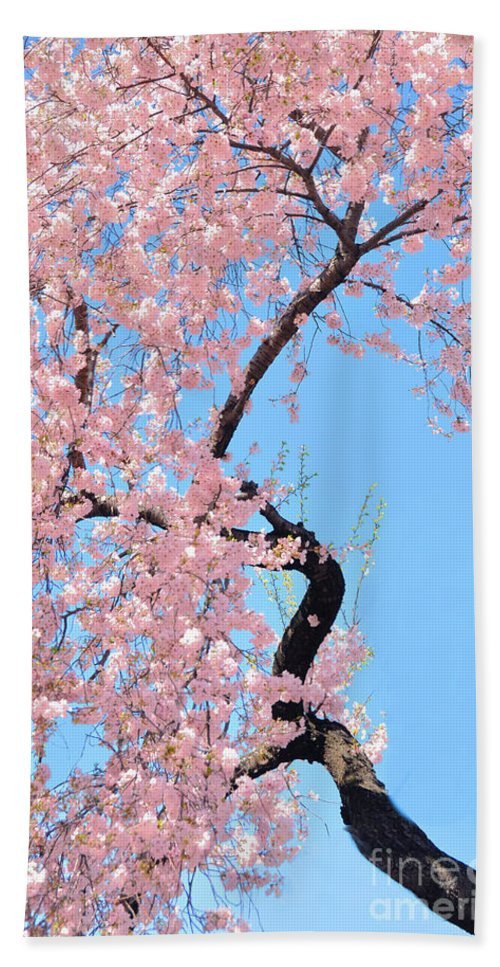 Cherry Blossoms Hand Towel featuring the photograph Cherry Blossom Trilogy IIi by Regina Geoghan