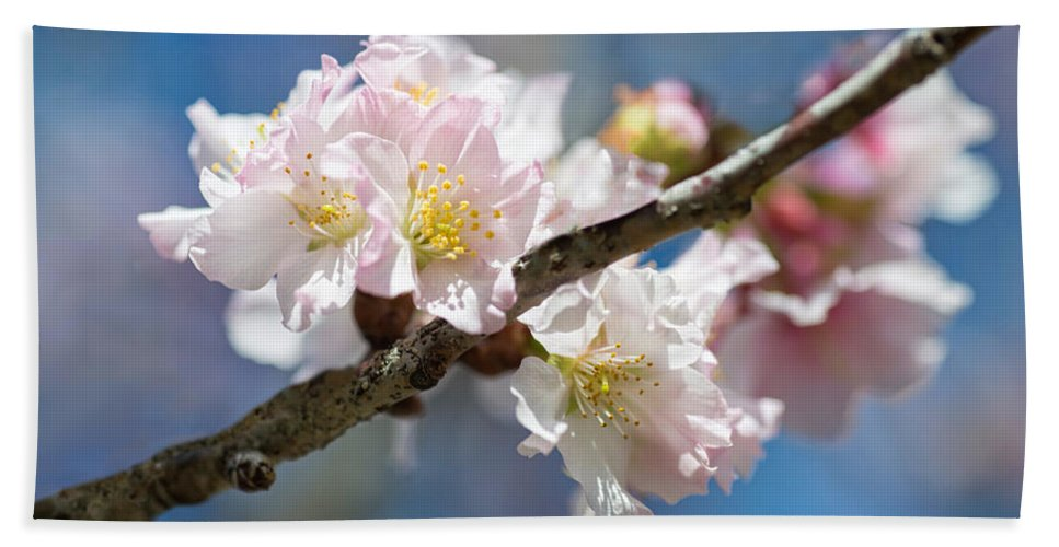 Cherry Bath Sheet featuring the photograph Cherry Blossoms On Blue by Lynn Bauer