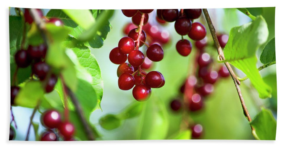 Cherries Bath Sheet featuring the photograph Cherry Jubilee by Christina Rollo