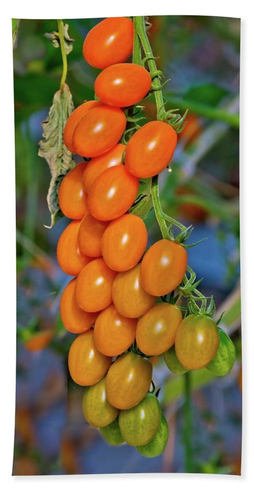 Tomatoes Bath Sheet featuring the photograph Cherry Tomatoes by Linda Unger
