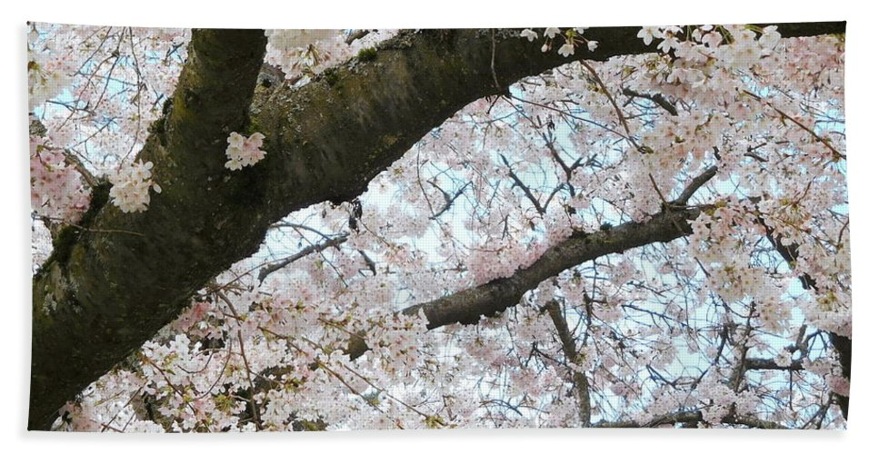 Cherry Hand Towel featuring the photograph Cherry Tree In Bloom by Maro Kentros