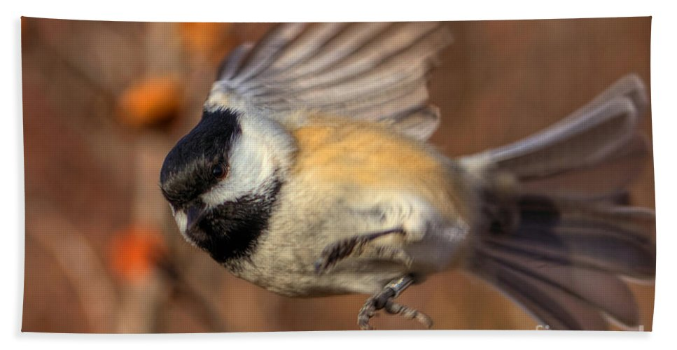 Bird Hand Towel featuring the photograph Chickadee Blurrrr by James Anderson