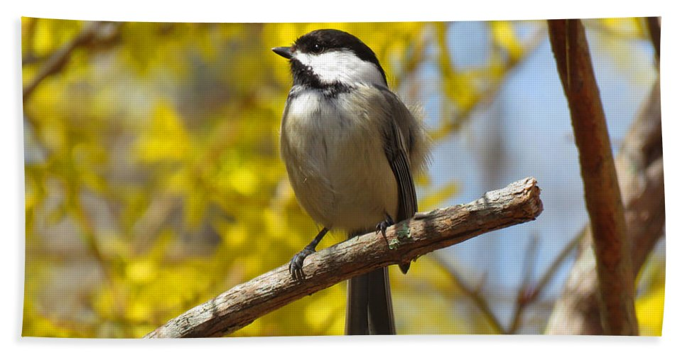 Chickadee Hand Towel featuring the photograph Chickadee In Spring by Dianne Cowen