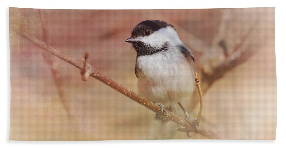 Chickadee Hand Towel featuring the photograph Chickadee In Spring by Susan Capuano