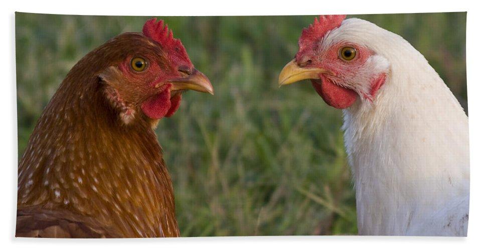 Chicken Hen Farm Rural Curious Bird Country Bath Towel featuring the photograph Chickens by Andrei Shliakhau