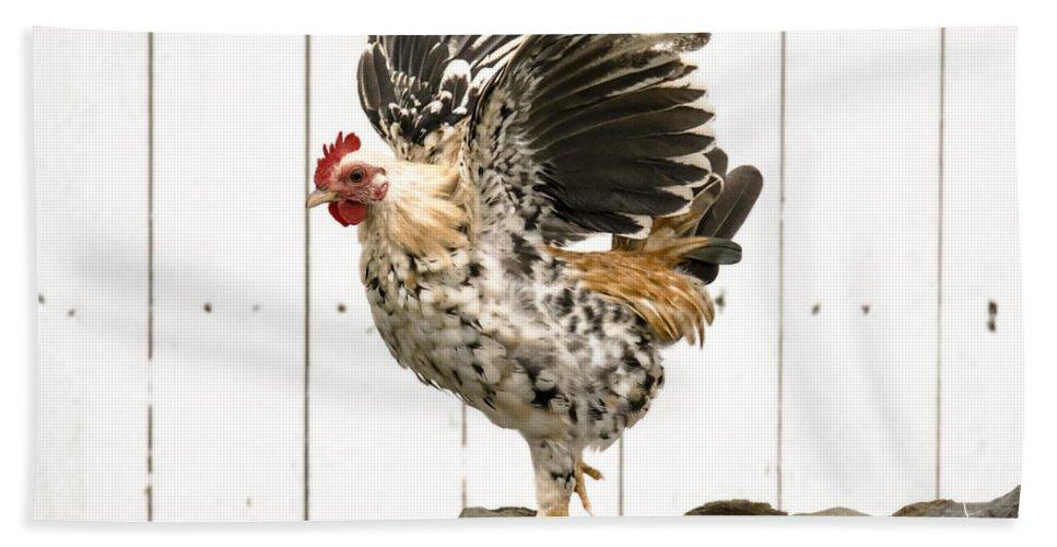 Chickens In Bird In Hand 2 Bath Sheet featuring the photograph Chickens In Bird In Hand 2 by Tracy Winter