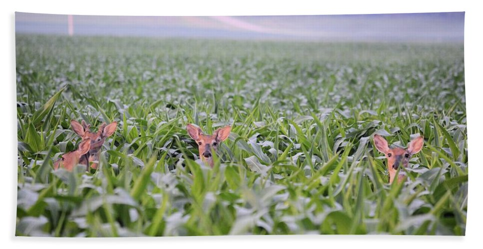 Deer Hand Towel featuring the photograph Children Of The Corn by Bonfire Photography
