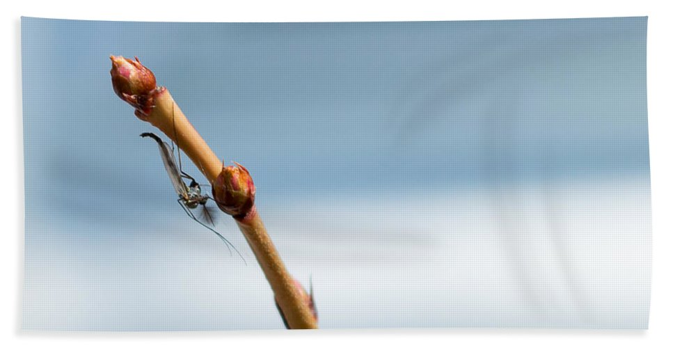 Midge Bath Sheet featuring the photograph Chillin' On A Stem by Keith Ptak