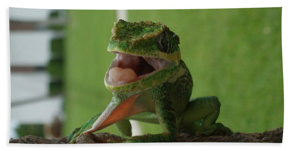 Iguana Bath Towel featuring the photograph Chilling On Wood by Rob Hans