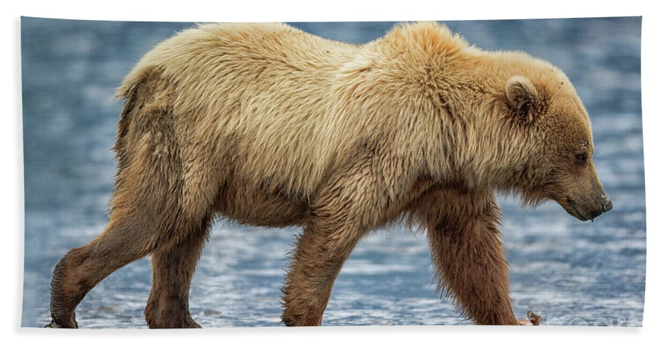 Alaska Bath Sheet featuring the photograph Chinitna Bay Brown Bear by Rob Daugherty
