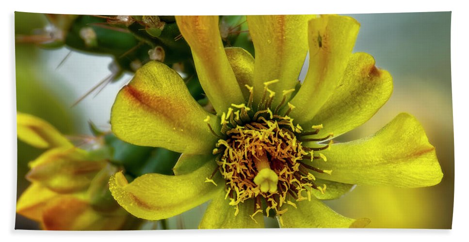 Cholla Hand Towel featuring the photograph Cholla Flower H1848 by Mark Myhaver