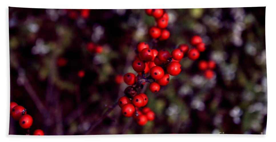 Red Berries Bath Sheet featuring the photograph Christmas Berries by Len-Stanley Yesh