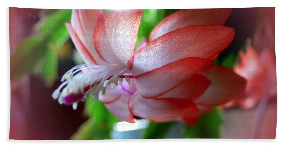 Plants Hand Towel featuring the photograph Christmas Cactus by Ericamaxine Price