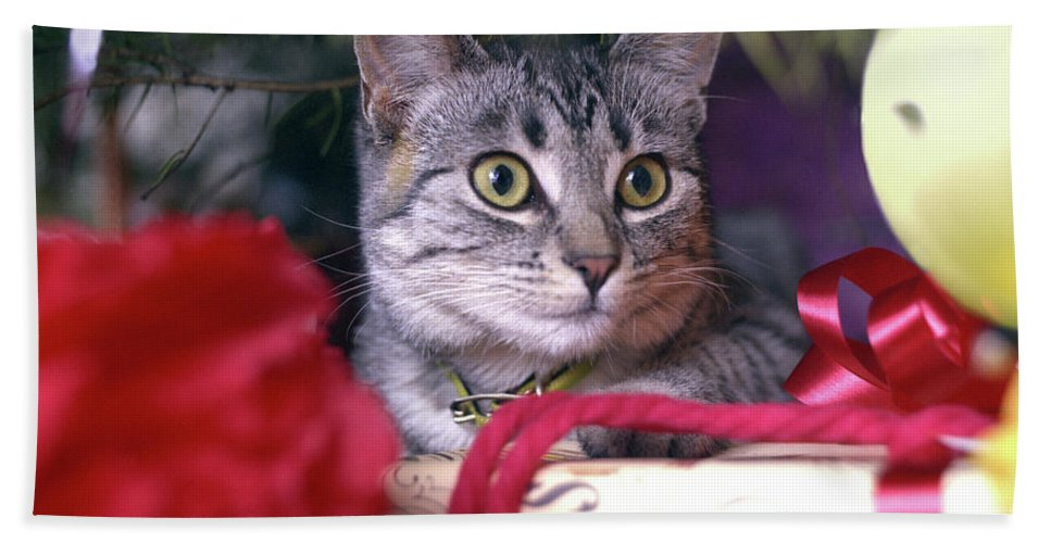 Animals Bath Sheet featuring the photograph Christmas Cat by Robert Chaponot