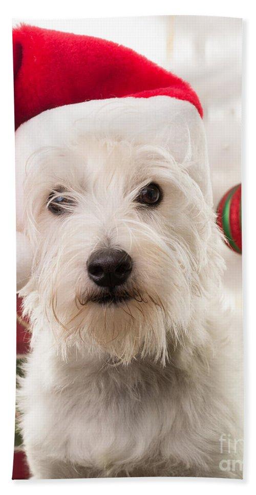 Christmas Bath Towel featuring the photograph Christmas Elf Dog by Edward Fielding