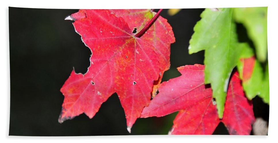 Leafs Hand Towel featuring the photograph Christmas Leafs by David Lee Thompson