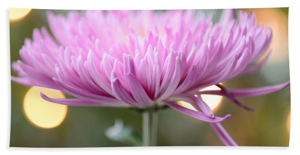 Chrysanthemum Hand Towel featuring the photograph Chrysanthemum Happiness by Olga Hamilton