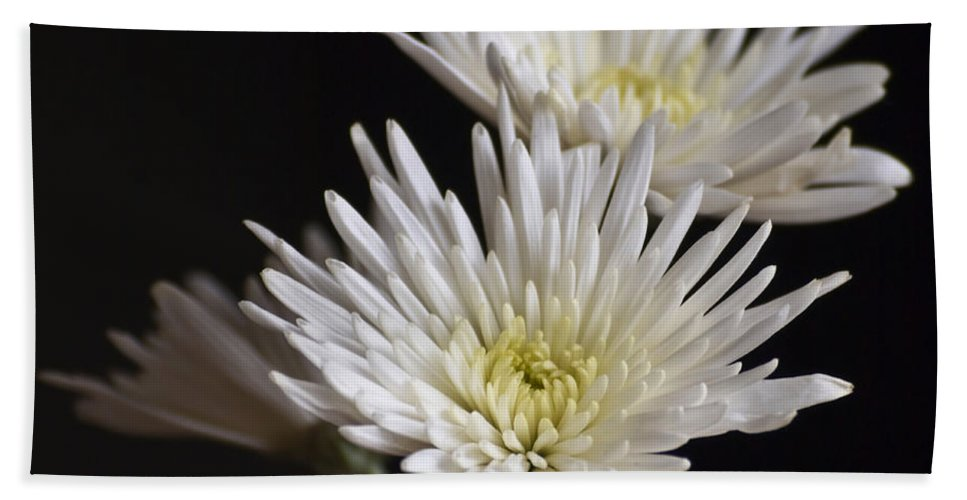 Flowers Hand Towel featuring the photograph Chrysanthemums by Svetlana Sewell