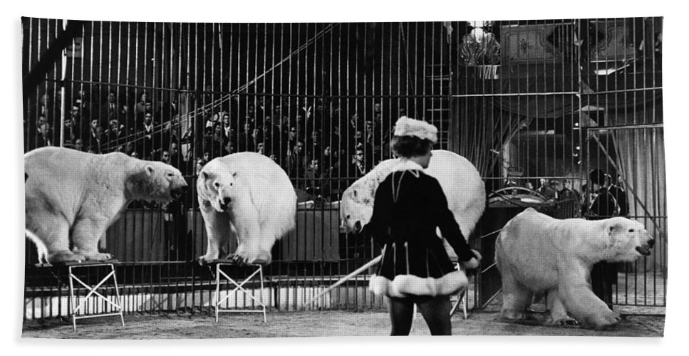 1930 Bath Sheet featuring the photograph Circus: Polar Bears by Granger