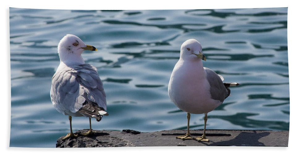 Gull Gulls Seagulls Lake Michigan Chicago Windy City Bird Couple Wave Water Pier Feather Hand Towel featuring the photograph City Gulls by Andrei Shliakhau