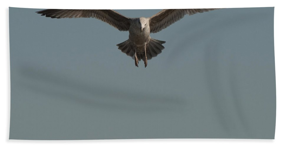 Seagull Bath Sheet featuring the photograph Clams For Dinner 2 by Steven Natanson
