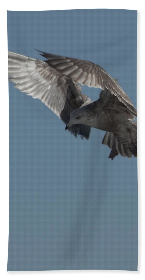 Seagull Bath Sheet featuring the photograph Clams For Dinner 3 by Steven Natanson