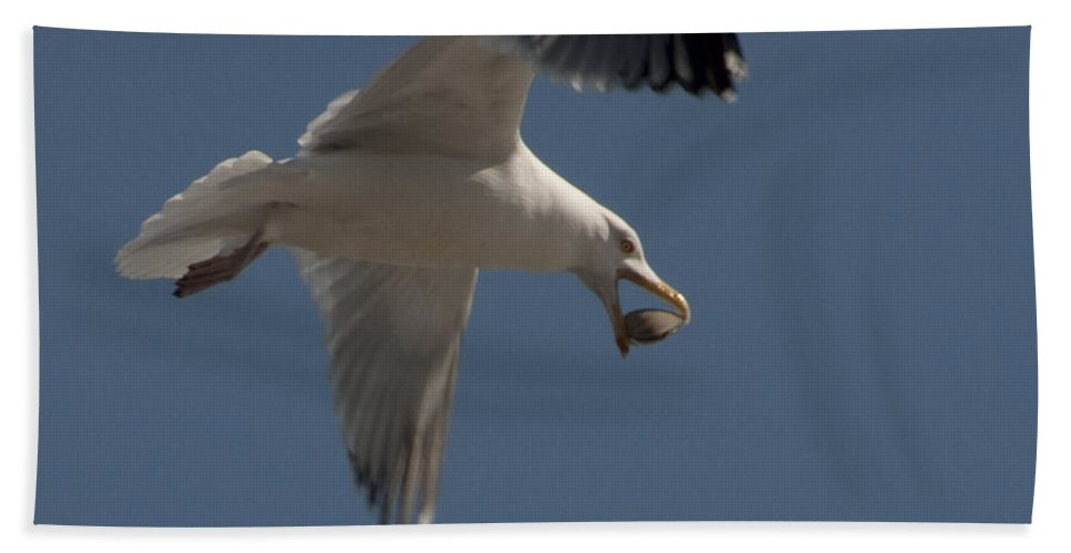 Seagull Bath Sheet featuring the photograph Clams For Dinner by Steven Natanson