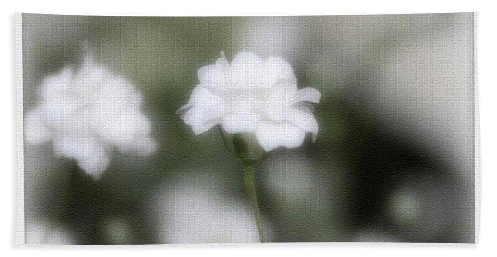 Flowers Bath Sheet featuring the photograph Classic White by Linda Sannuti