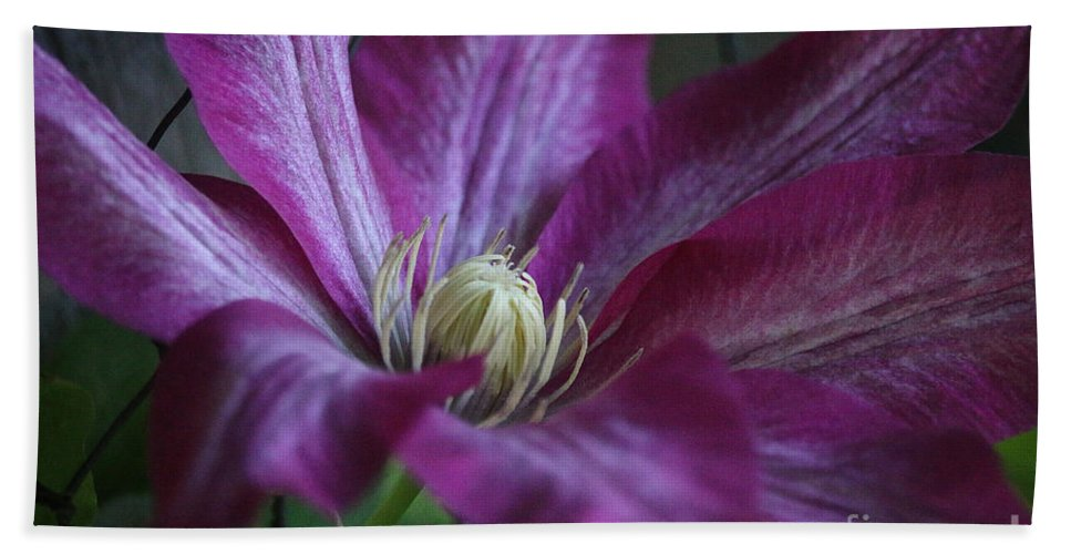 Flower Hand Towel featuring the photograph Clematis Close-up by Susan Herber