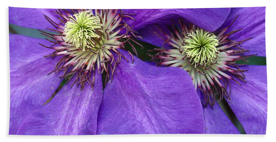 Flowers Hand Towel featuring the photograph Clematis Detail by Sandra Bronstein
