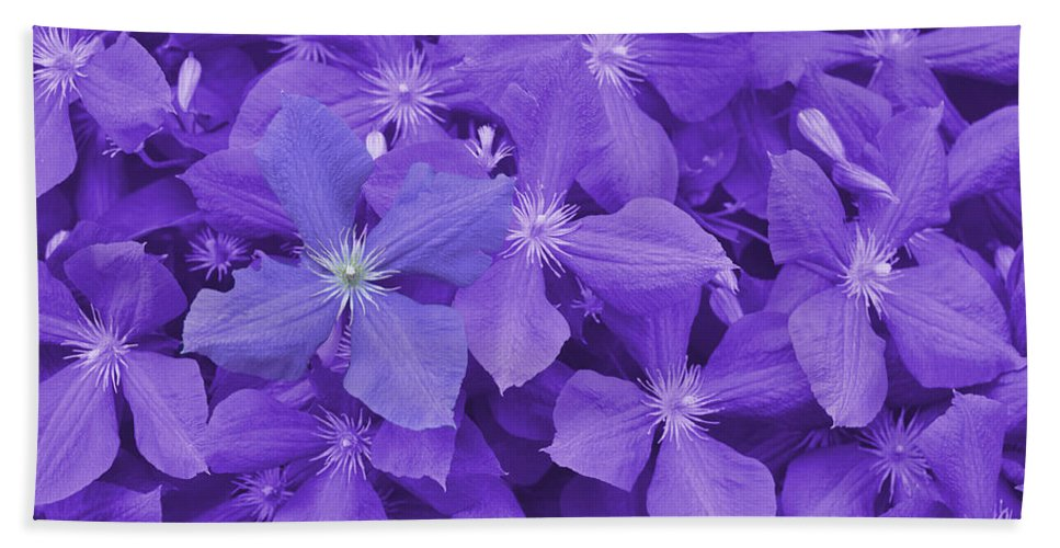 Purple Bath Sheet featuring the photograph Clematis by JAMART Photography