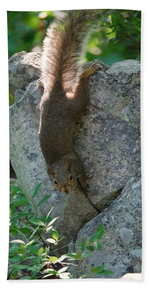 Squirrel Bath Sheet featuring the photograph Cliff Hanger by Eric Liller