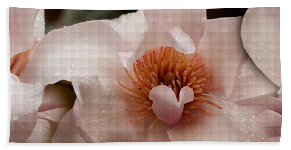 Photography Bath Sheet featuring the photograph Close-up Of Pink Ladies Flowers by Panoramic Images