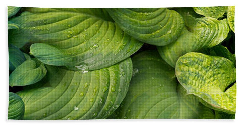 Photography Bath Sheet featuring the photograph Close-up Of Raindrop On Green Leaves by Panoramic Images