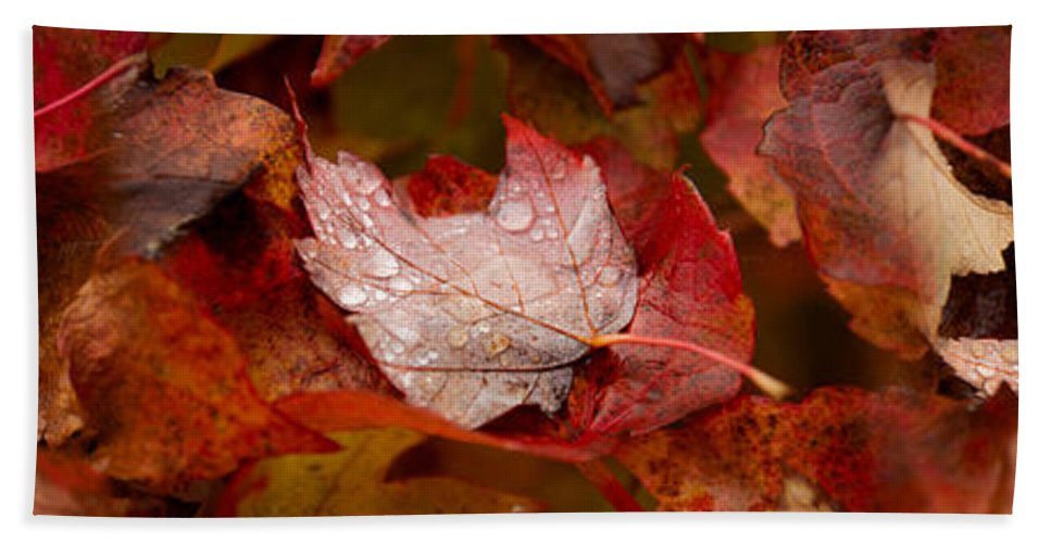 Photography Bath Sheet featuring the photograph Close-up Of Raindrops On Maple Leaves by Panoramic Images
