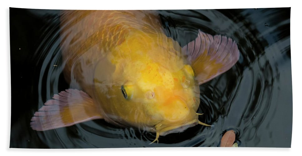 Fish Bath Sheet featuring the photograph Close Up Of Single Large Yellow Koi Fish With Whiskers by Sharon Minish