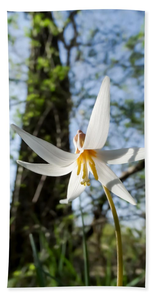 Close-up Of White Trout Lily Bath Sheet featuring the photograph Close-up Of White Trout Lily by Cynthia Woods