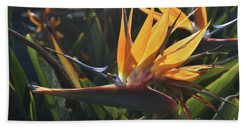 Bird-of-paradise Hand Towel featuring the photograph Close Up Photo Of A Bee On A Bird Of Paradise Flower by DejaVu Designs