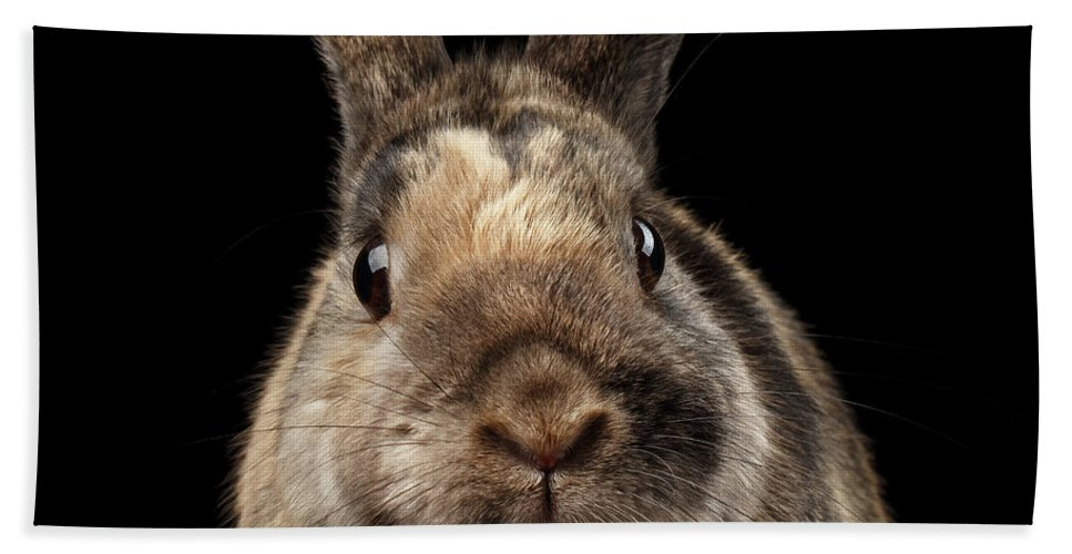 Rabbit Hand Towel featuring the photograph Closeup Funny Little rabbit, Brown Fur, isolated on Black Backgr by Sergey Taran