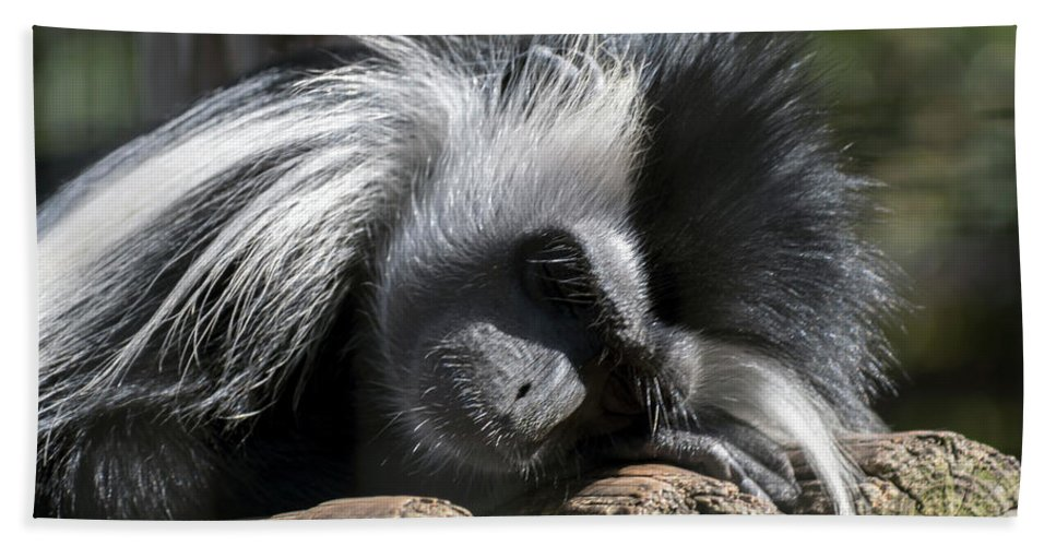 Primate Bath Sheet featuring the photograph Closeup Of Black And White Angolian Primate Sleeping On Log Raft by Sharon Minish