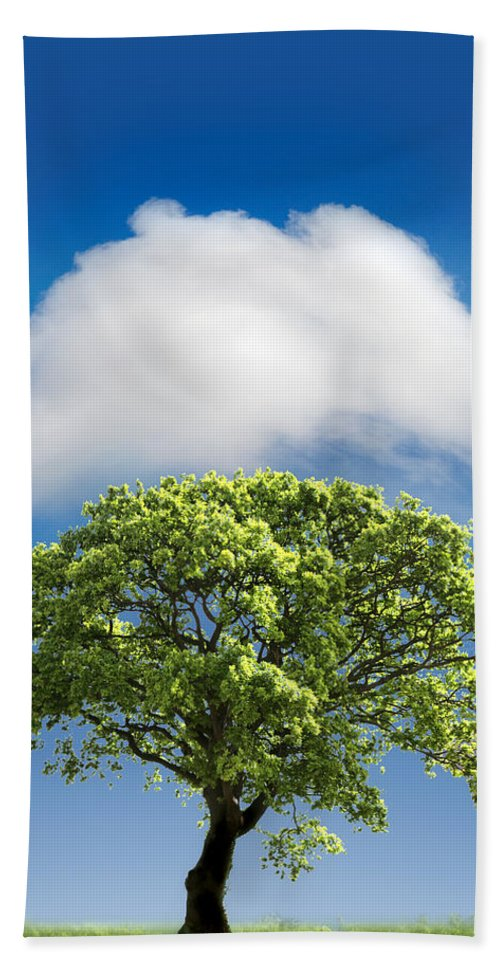 Tree Bath Towel featuring the photograph Cloud Cover by Mal Bray