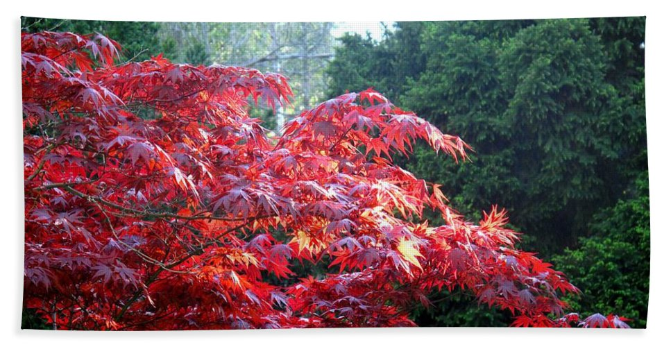 James Gardens Bath Sheet featuring the photograph Clouds Of Leaves by Ian MacDonald